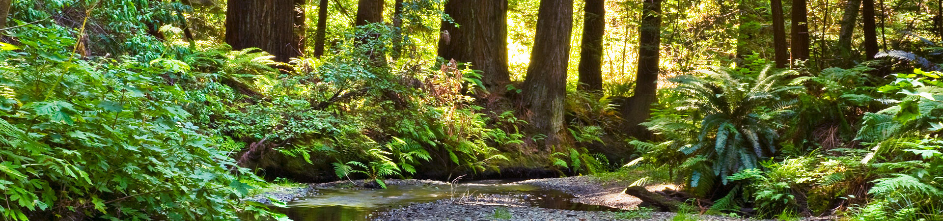 Mendocino Redwood Forest and Stream